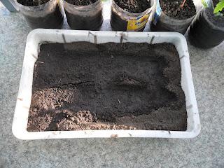 Подготовка рассадного грунта