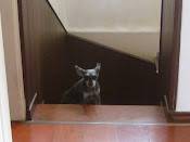 Lillo,nao sobe o ultimo degrau