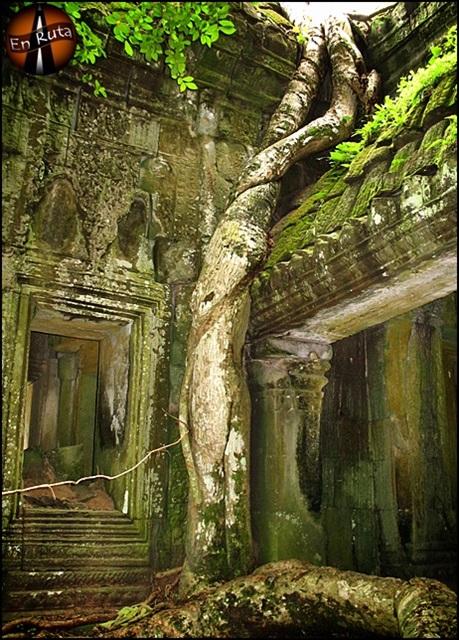 Ta-Prohm-Templos-de-Angkor_8