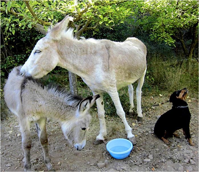 Www freeplays de ki donkey kong rumble