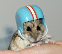 Pisahkan Hamster Berantem dengan cepat