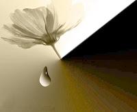 Homem, Desgosto, Facilidade, Prazer, Emoções, Frases de Amor, Frases de Carinho, Relacionamento