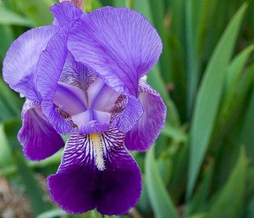 Arte y jardiner a el cuidado de las orqu deas for Cuidado de las orquideas moradas