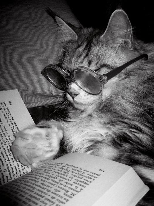 El Gato Literato