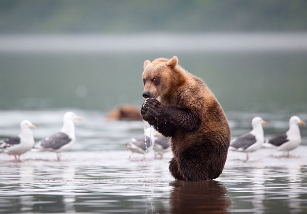 bear, funny animal pictures, animal photos, funny animals