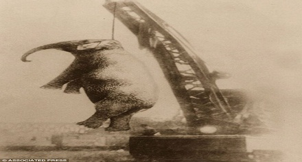 تعرف لماذا تم الحكم على هذا الفيل بالإعدام شنقا ليصبح أول حكم إعدام لفيل بالتاريخ !