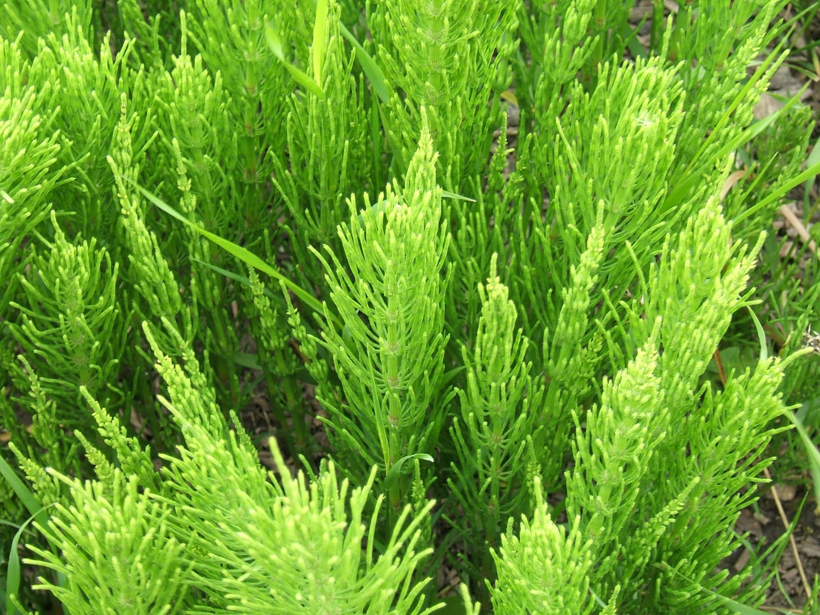 identification of an adulterated herb A component of the medicinal herb ephedra blocks  final rule declaring dietary supplements containing ephedrine alkaloids adulterated because  identification.