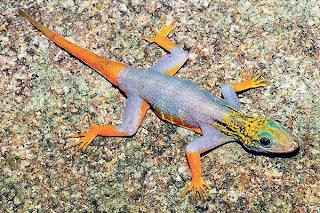 Spesies baharu setiap 2 hari di Mekong