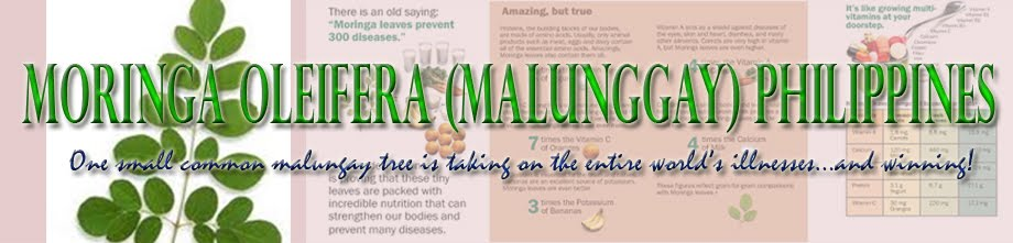 Moringa Oleifera (Malunggay) Philippines