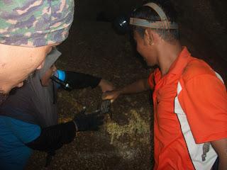 gua batu maloi | katak gunung | katak