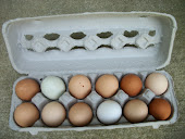 2012 Farm Fresh Eggs