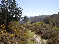 Ley 7/2012 de montes de Galicia