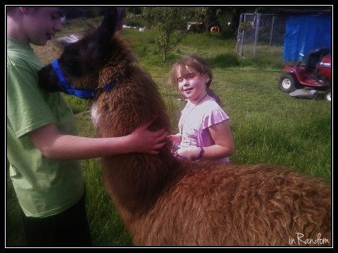 Llama Harness