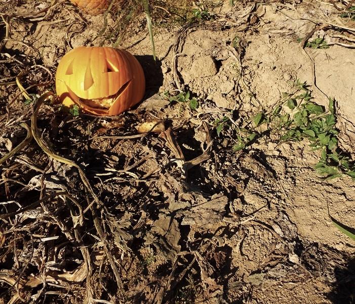 http://thepumpkinhollow.blogspot.com/2014/09/from-todays-pumpkin-picking.html