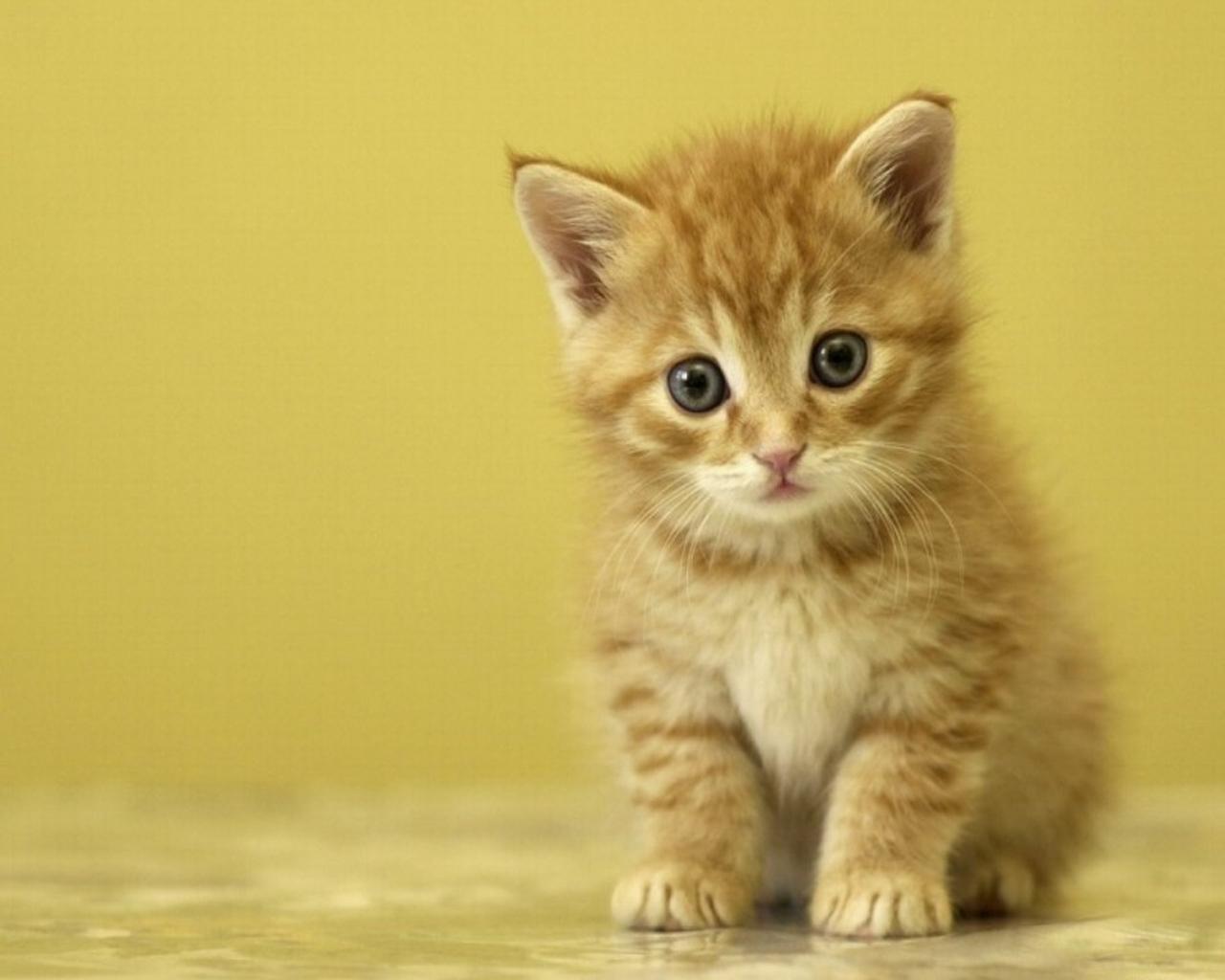 Toi de d couvrir mon petit chat po me par maurice car me - Image de petit chat ...