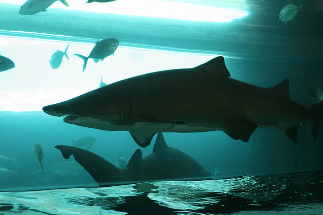 Baby Led Weaning con 15 meses tiburones