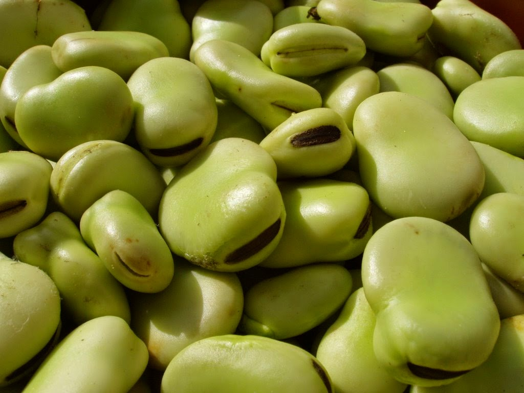 Baklalı Sebze Salatası