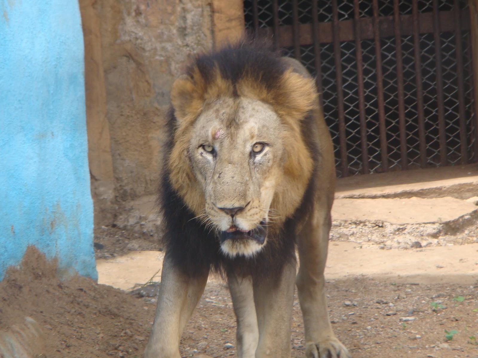 vandaloor zoo chennai anna zoological park photos enidhi india
