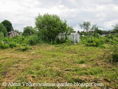 Аленин сад, часть 1, целина, участок до, освоение участка