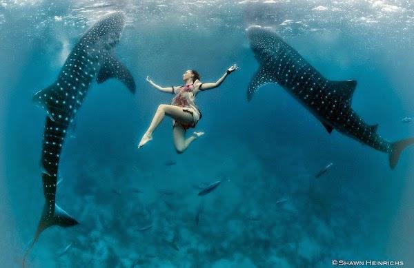 Roberta Mancino scuba-diving with sharks