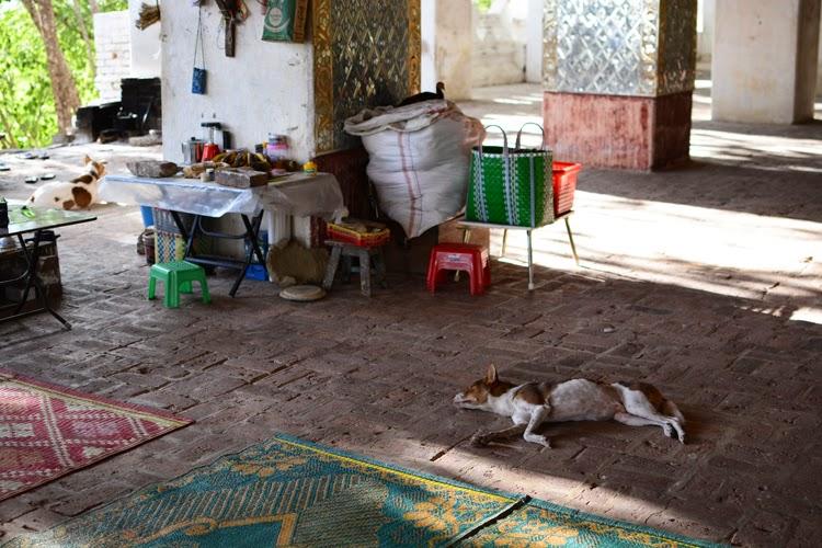 Birmanie, myanmar, voyage, photos de voyage, mandalay, colline, chien