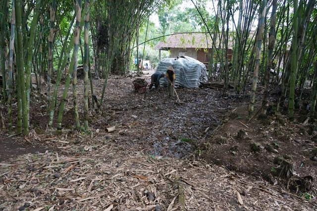 Kebun bambu siap disulap menjadi pasar.