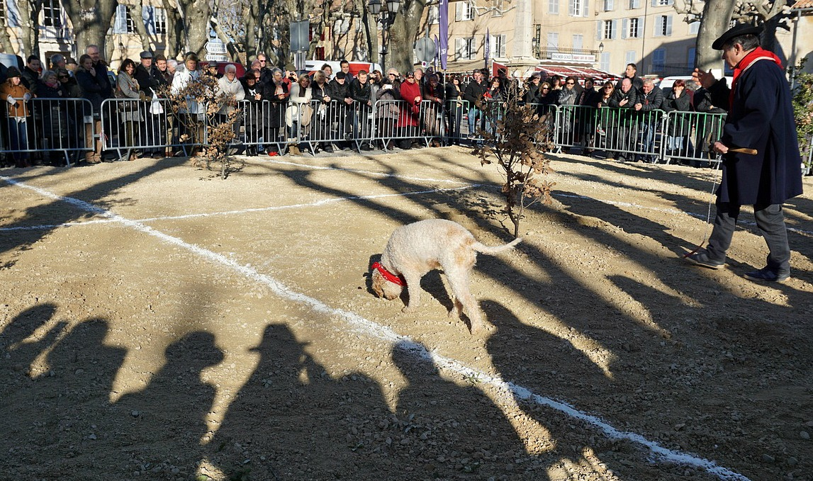 Truffle dog competition at Aups Truffle Festival