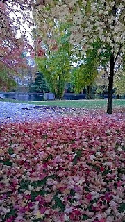 River of Leaves