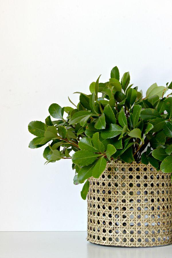 DIY, Cane Webbing Vase, floral vase