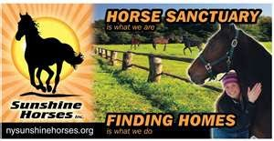 Donate To The Sunshine Horses