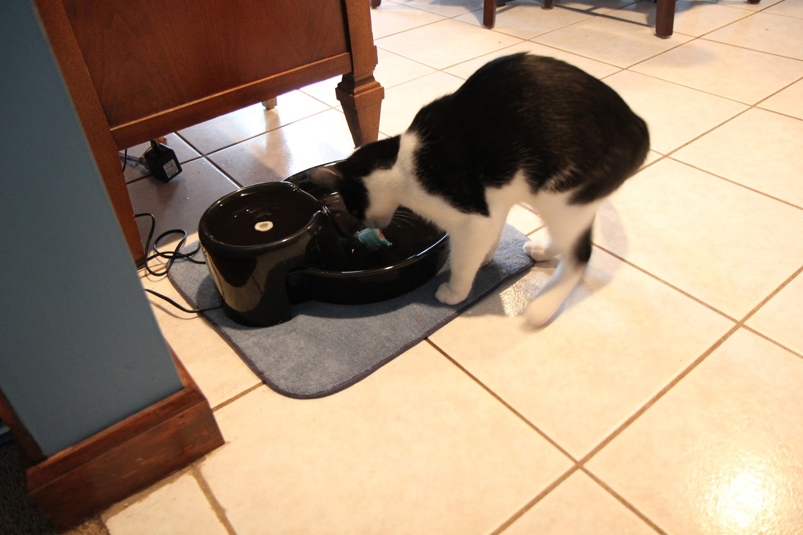 Cat sniffs toy floating in water bowl.