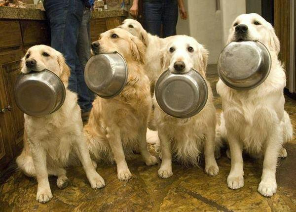 Thanksgiving Food Dogs Can T Eat