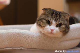 Kenapa Kucing Menoleh Jika Dipanggil