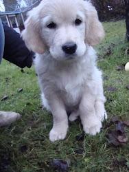 Vår söta hund Hulda