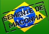 http://www.sementemaconha.com/