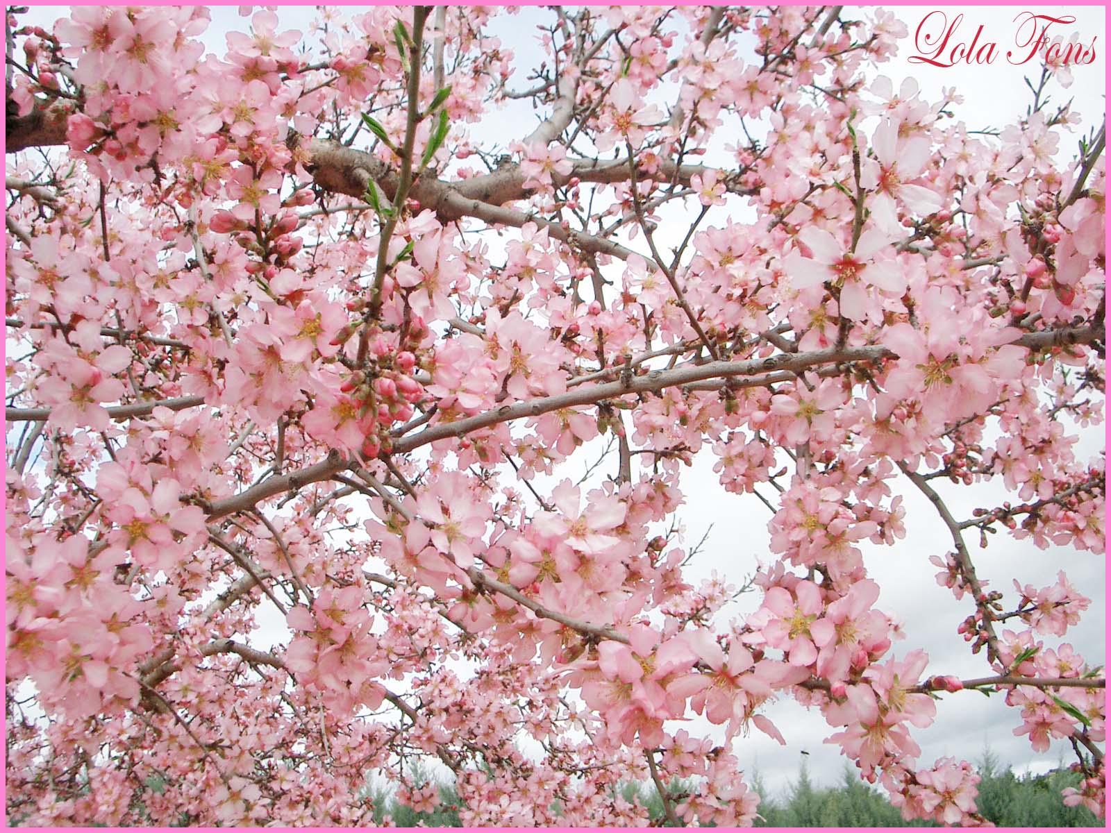 Pensando jardines 1 de marzo for Lista de arboles de hoja caduca
