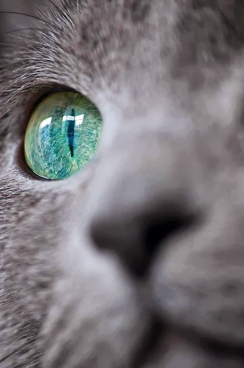 Cat's green eye