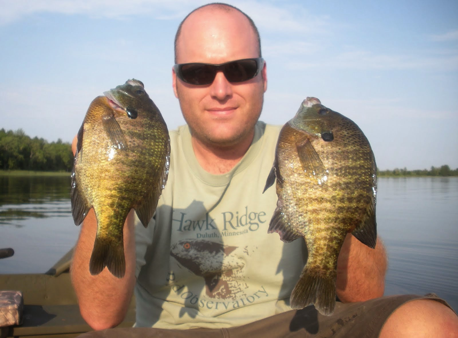 Leech Lake Bluegills