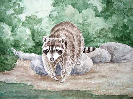 raccoon art