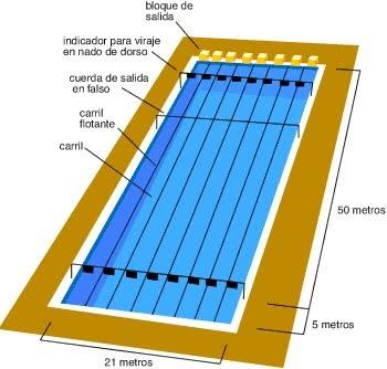 Nataci n y acu ticos imagen n 1 medidas y for Medidas de una piscina para una casa
