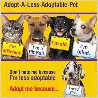 pet rescue photo