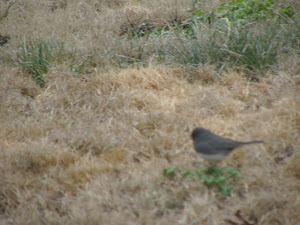 Sparrow friends