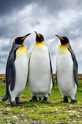 Tres pingüinos charlando en los paisajes de la Patagonia