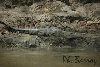 Paysages Mexique Chiapas Yaxchilan Usumacinta Crocodile blog photos voyage