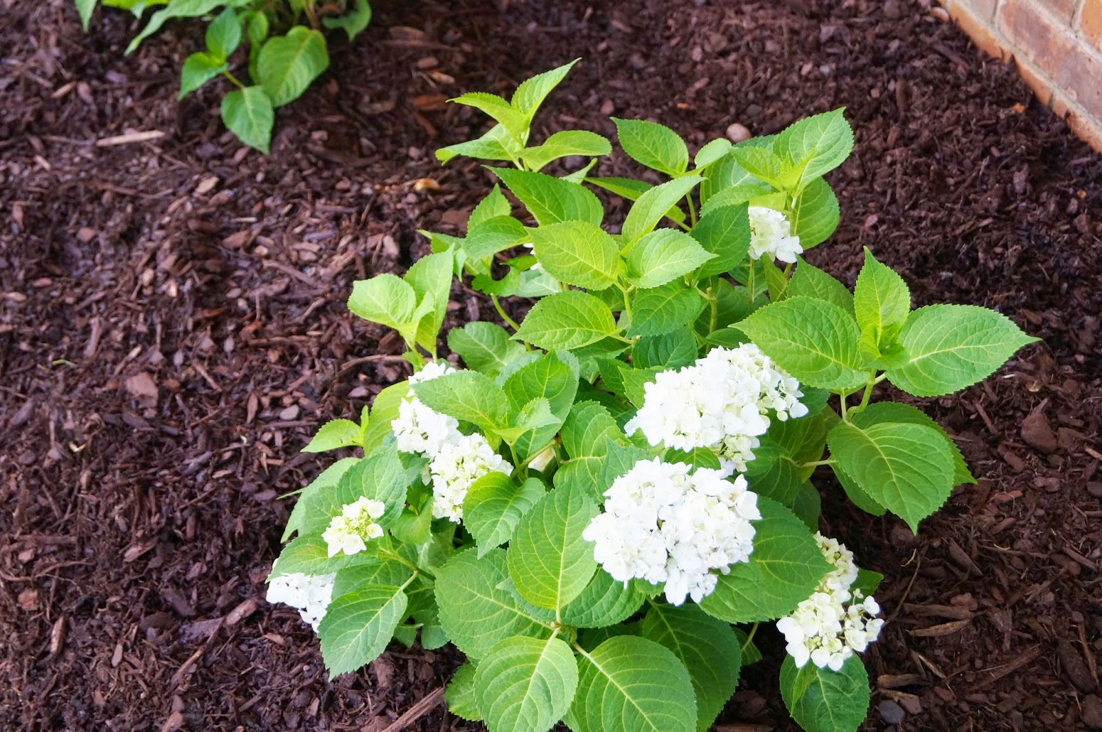 how to clean out overgrown flower bed