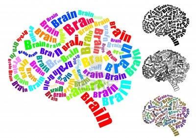 Cerebro.Humano