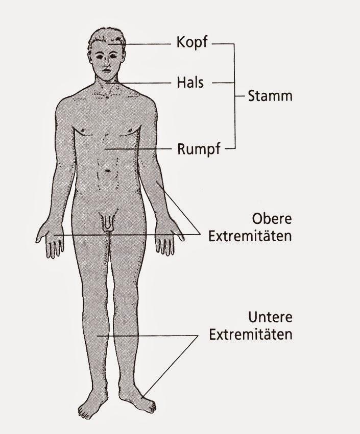 Anatomie: Körperabschnitte – Anatomischer Aufbau