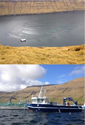 Belajar dari BAKKAFORST Bagaimana Mengelola Pasar Ikan di Faroe Island - Denmark