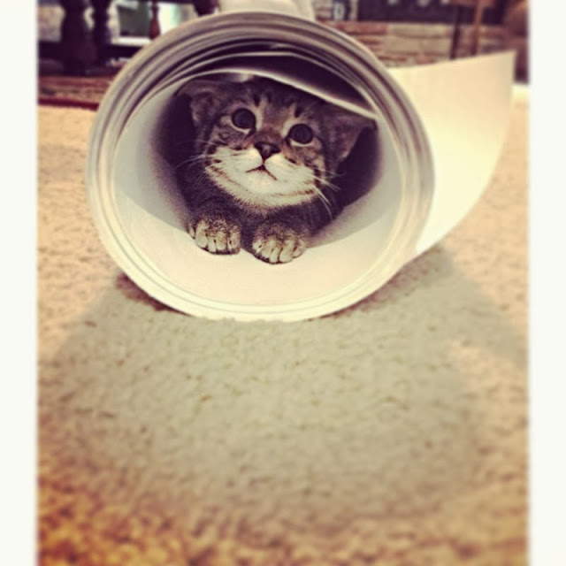 Funny cats - part 82 (40 pics + 10 gifs), cat photo, cat hides inside paper roll