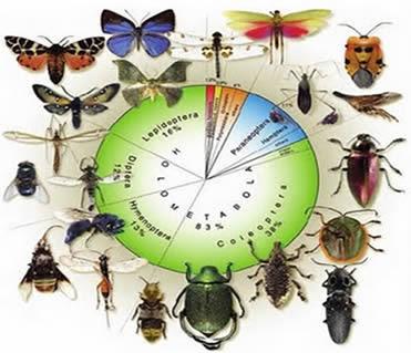 Nomes de insetos
